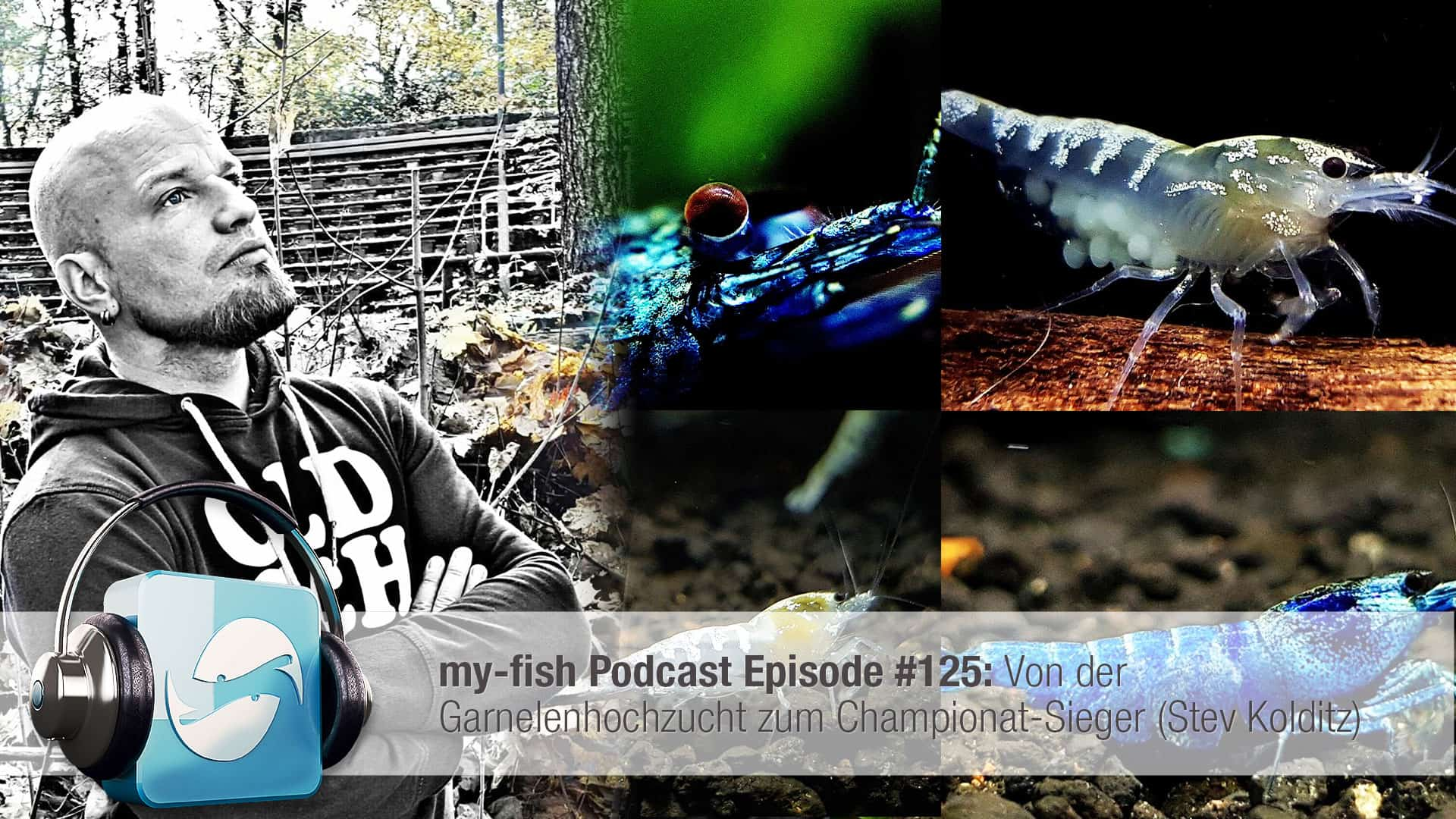 Podcast Episode #125: Von der Garnelenhochzucht zum Championat-Sieger (Stev Kolditz) 1