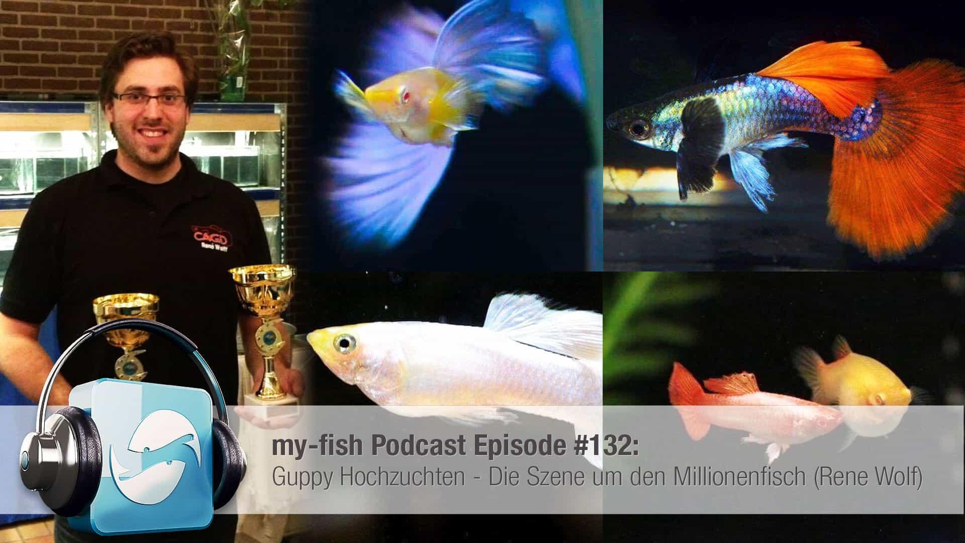 Podcast Episode #132: Guppy Hochzuchten - Die Szene um den Millionenfisch (Rene Wolff) 1