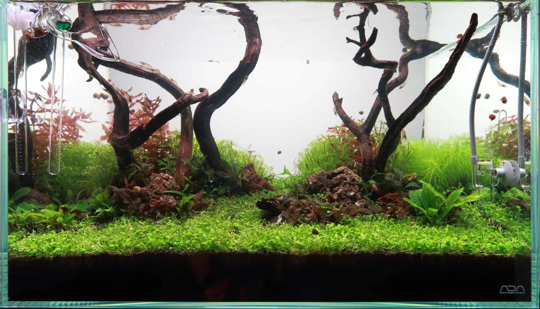 Podcast Episode #134: Wasserpflanzen richtig schneiden 4