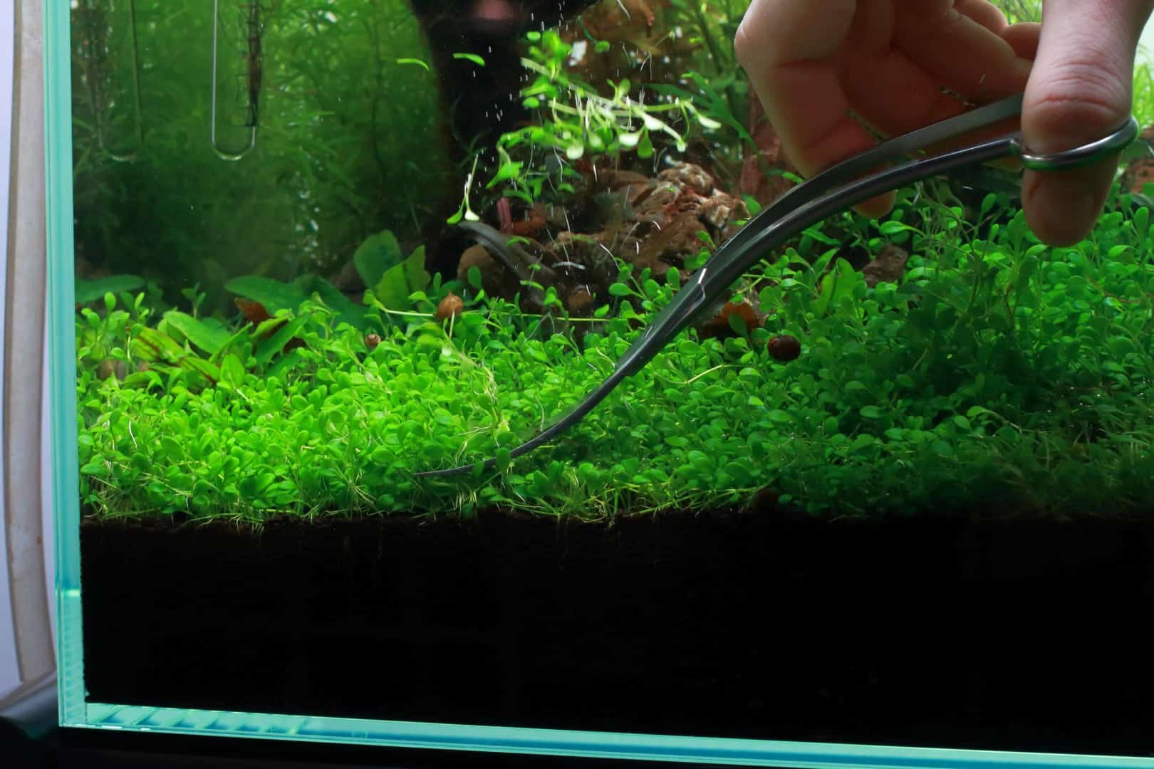 Podcast Episode #135: Bodendecker im Aquarium (Oliver Lindemann) 8