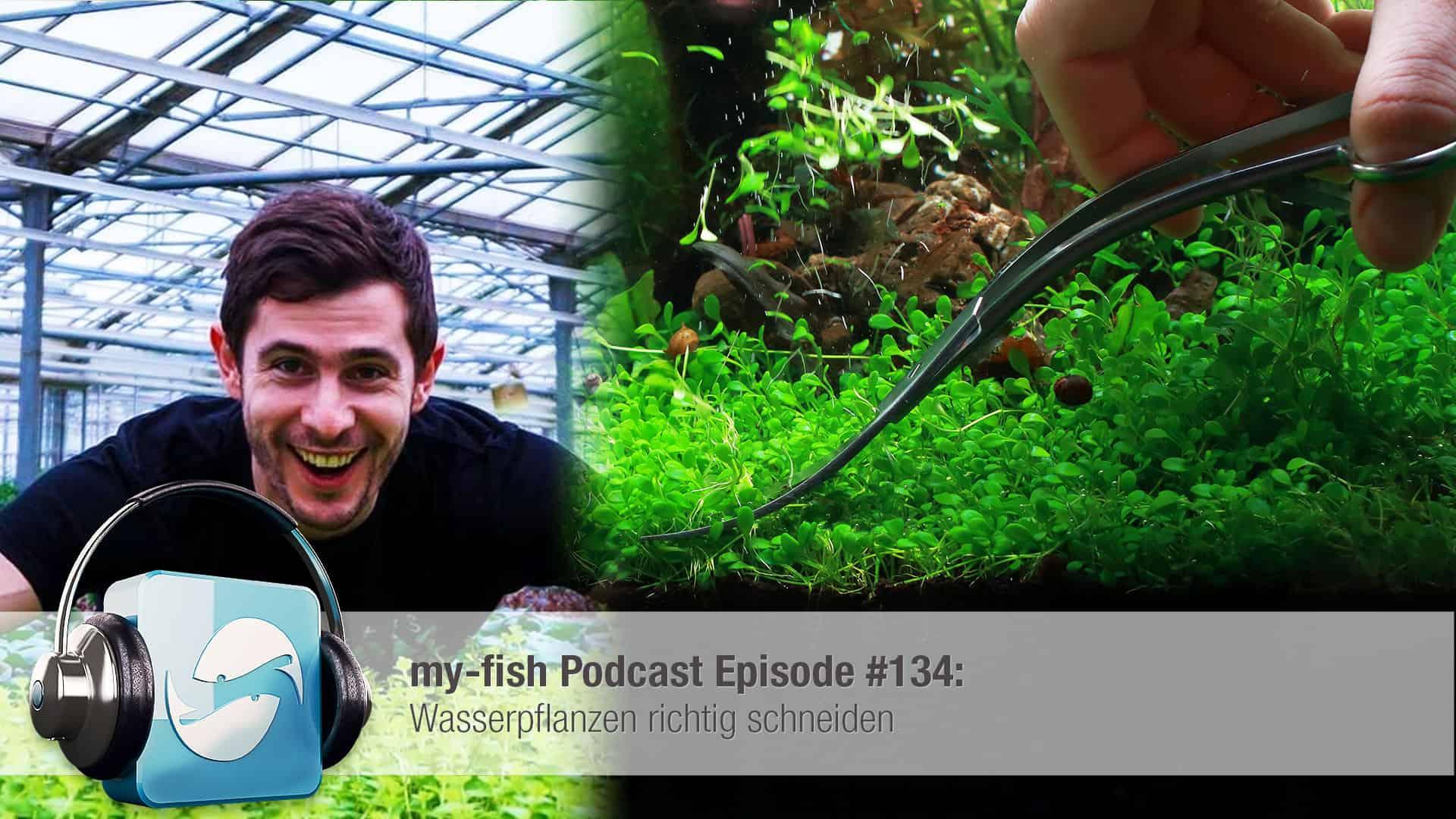 Podcast Episode #134: Wasserpflanzen richtig schneiden 1