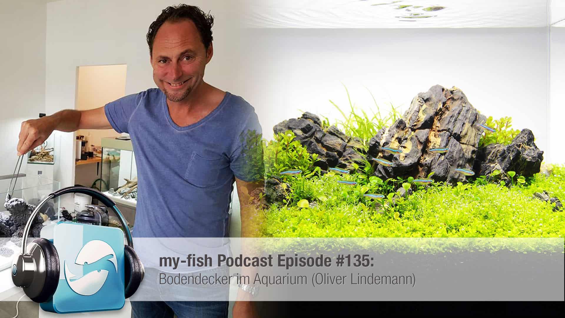 135 Bodendecker Im Aquarium Oliver Lindemann My Fish Aus Freude