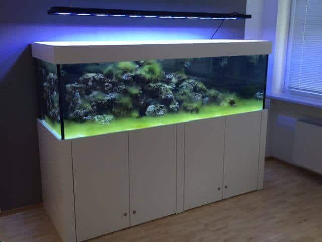 podcast episode 138 einsiedlerkrebse im meerwasseraquarium markus mahl my fish. Black Bedroom Furniture Sets. Home Design Ideas