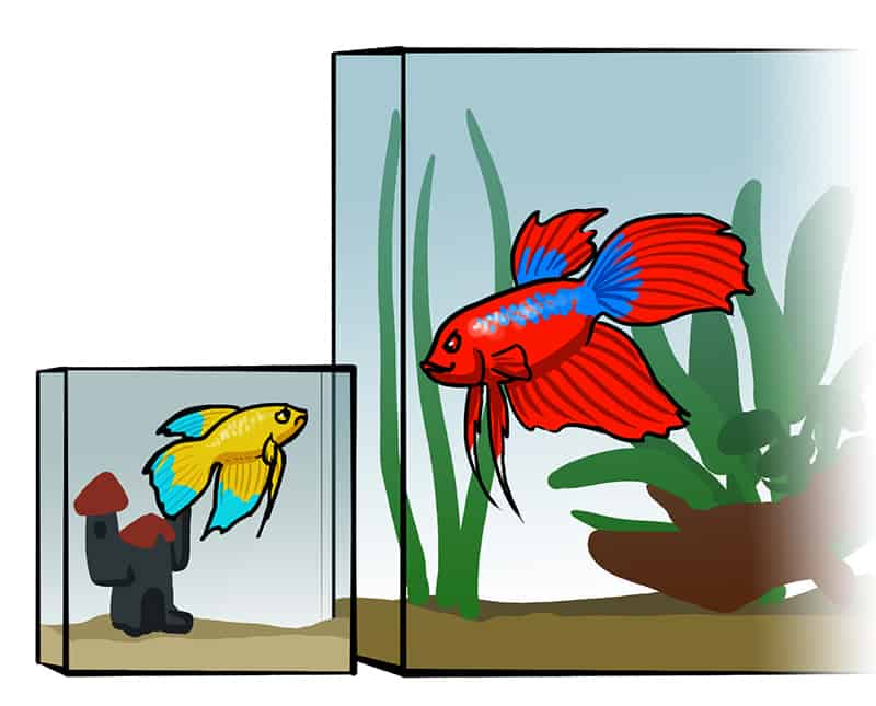 Mythos: Passen sich Fische der Beckengröße an? 1