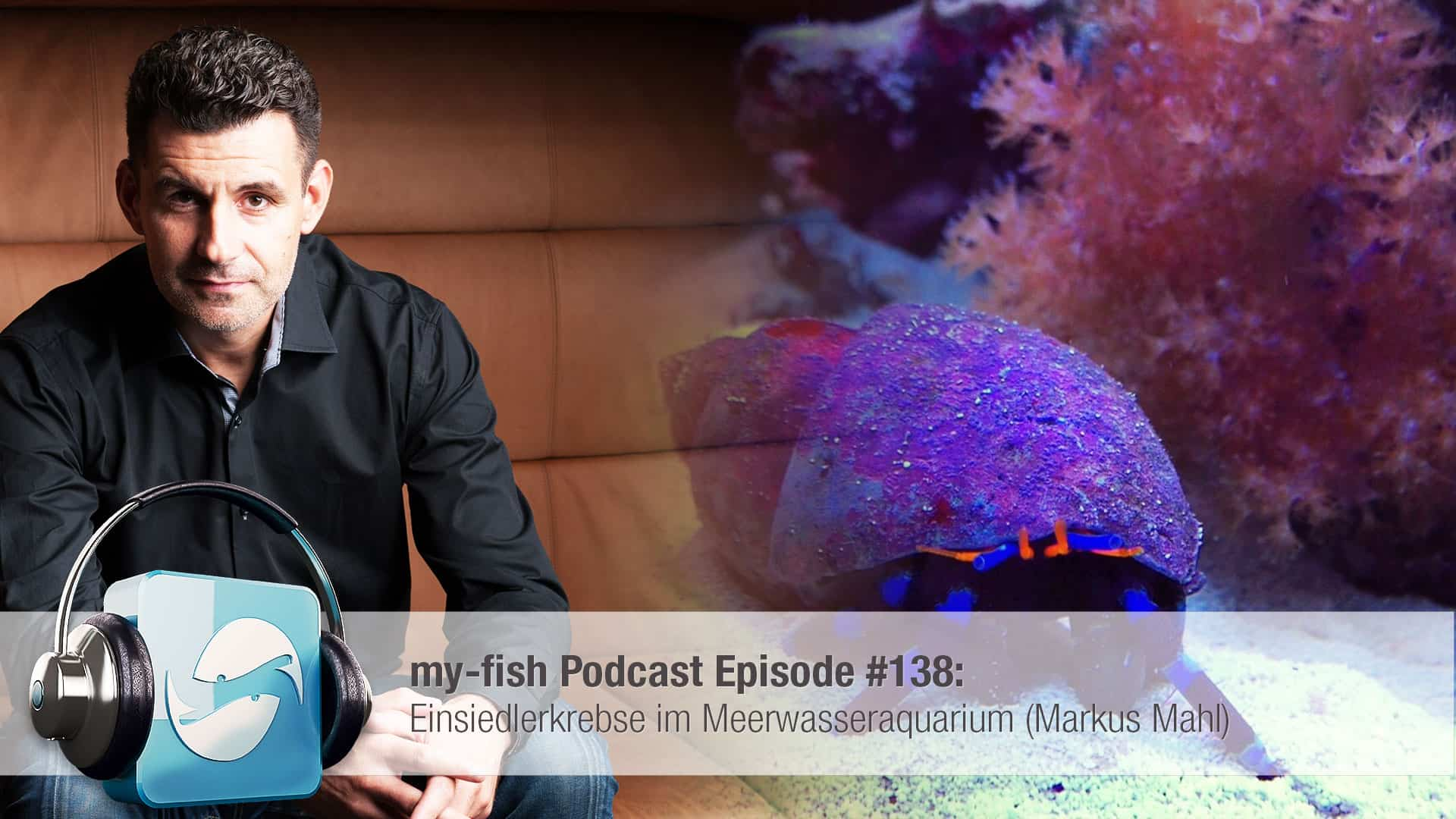 Podcast Episode #138: Einsiedlerkrebse im Meerwasseraquarium (Markus Mahl) 1