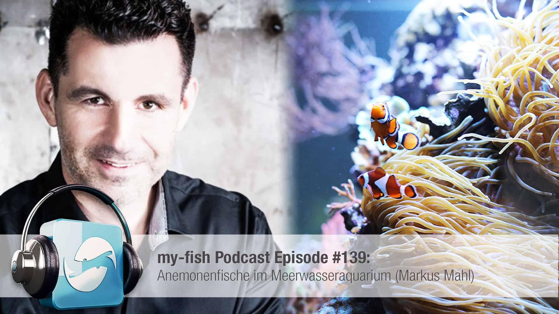Podcast Episode #139: Anemonenfische im Meerwasseraquarium (Markus Mahl) 1