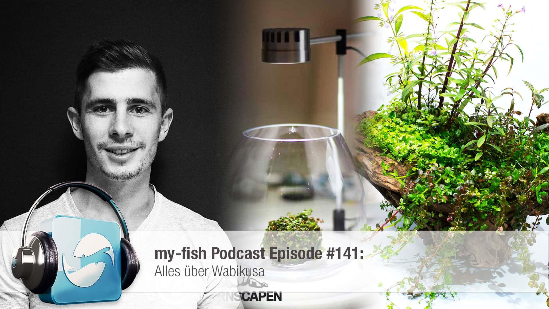 Podcast Episode #141: Alles über Wabikusa 1