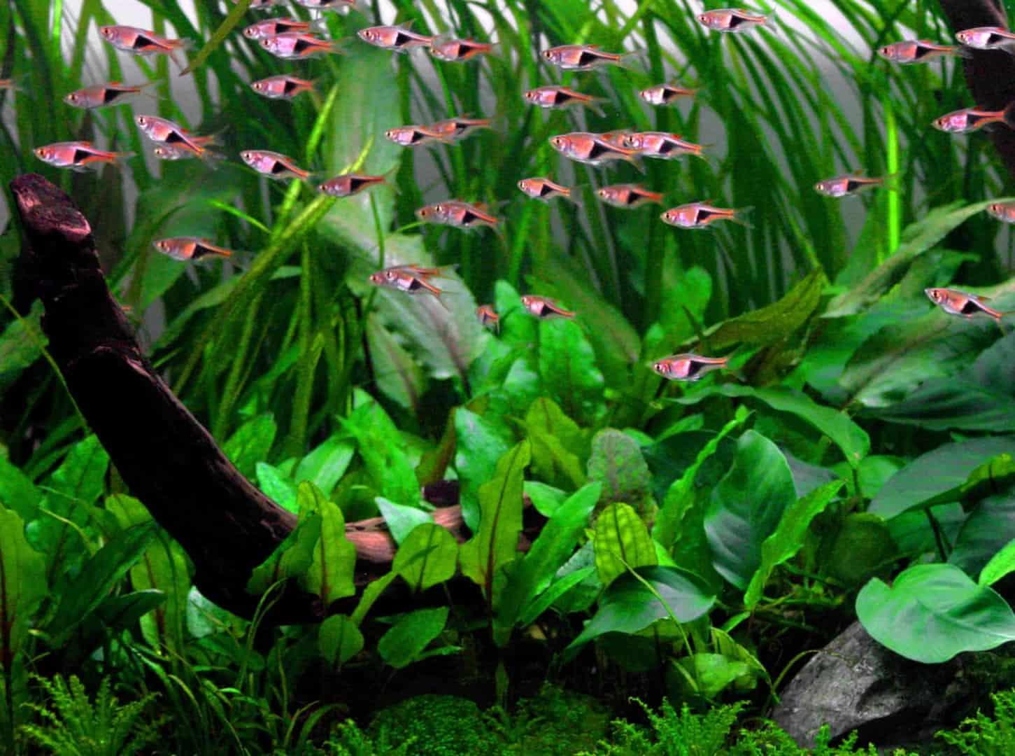 Podcast Episode #144: Einfache Pflanzen für ein Einsteigeraquarium 13