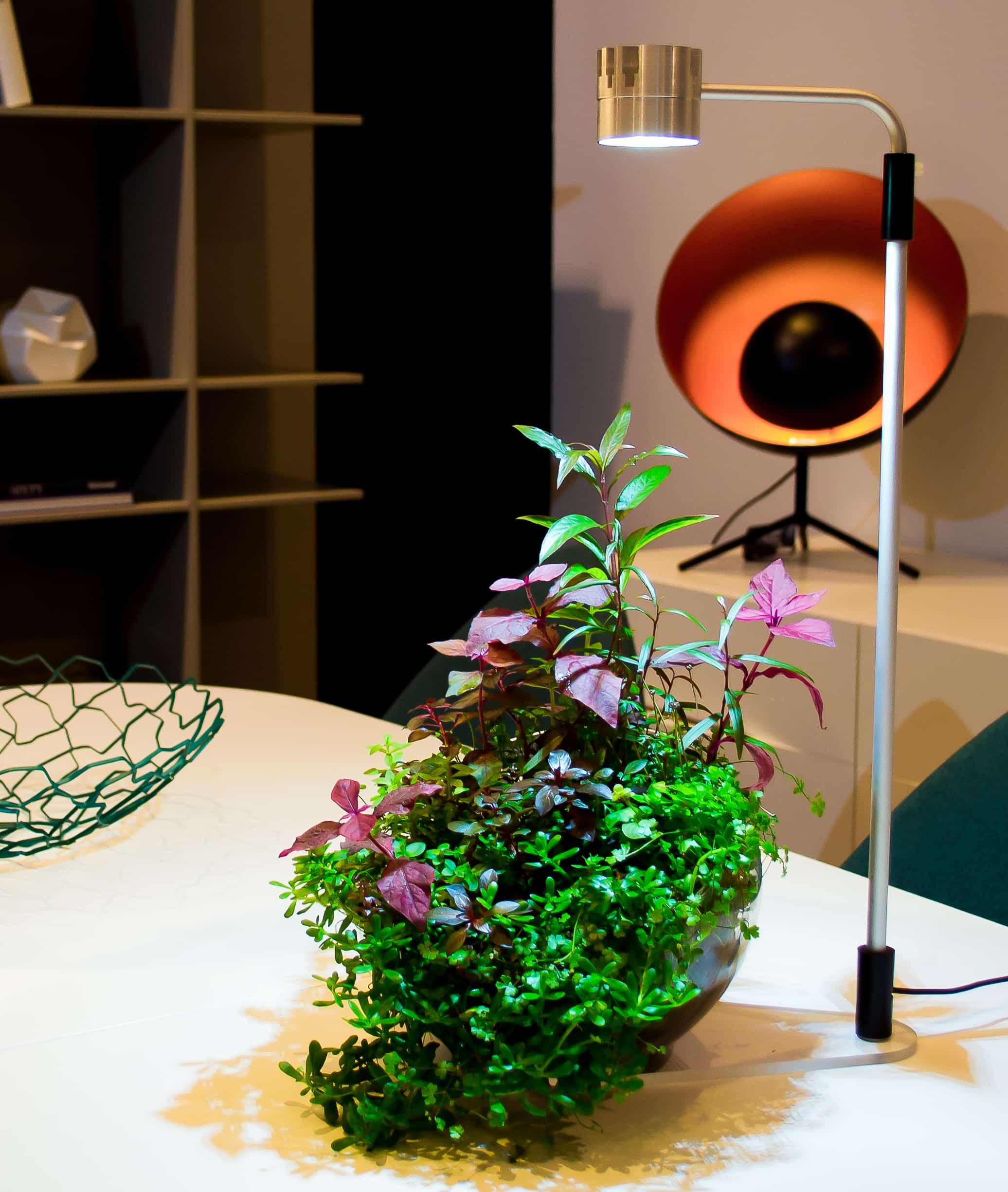 Wabi Kusa-Aquarien: Biotope fürs Wohnzimmer 1