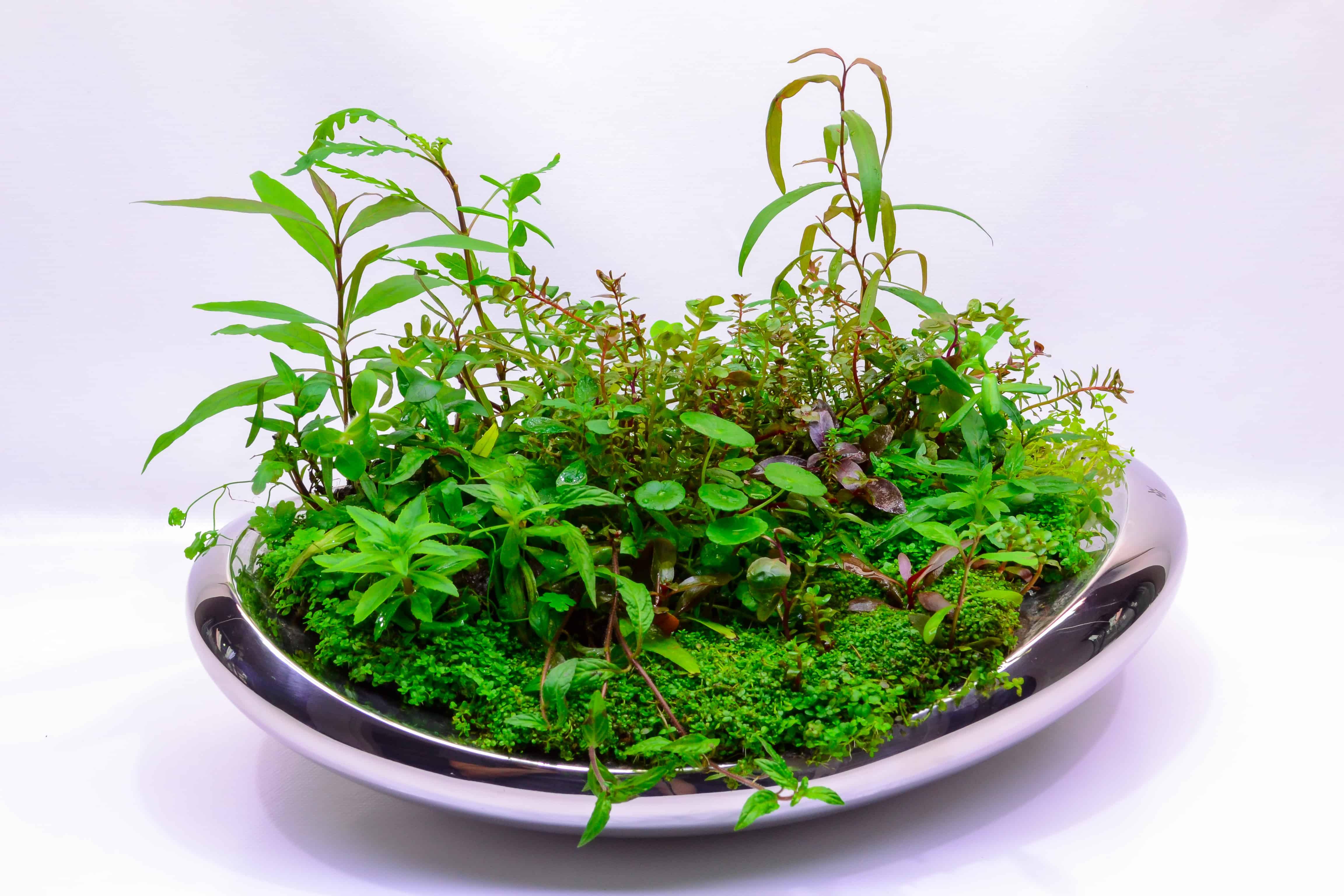 Wabi Kusa-Aquarien: Biotope fürs Wohnzimmer 2