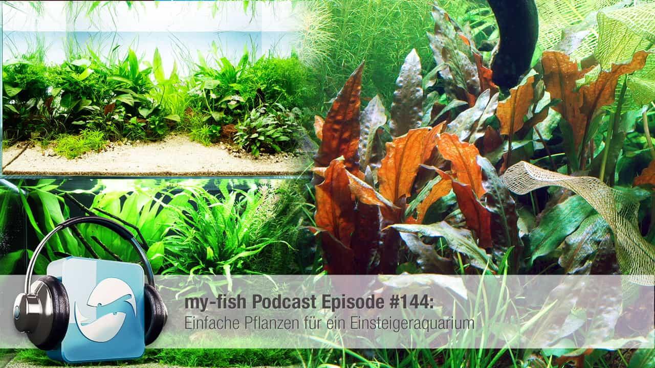 Podcast Episode #144: Einfache Pflanzen für ein Einsteigeraquarium 1