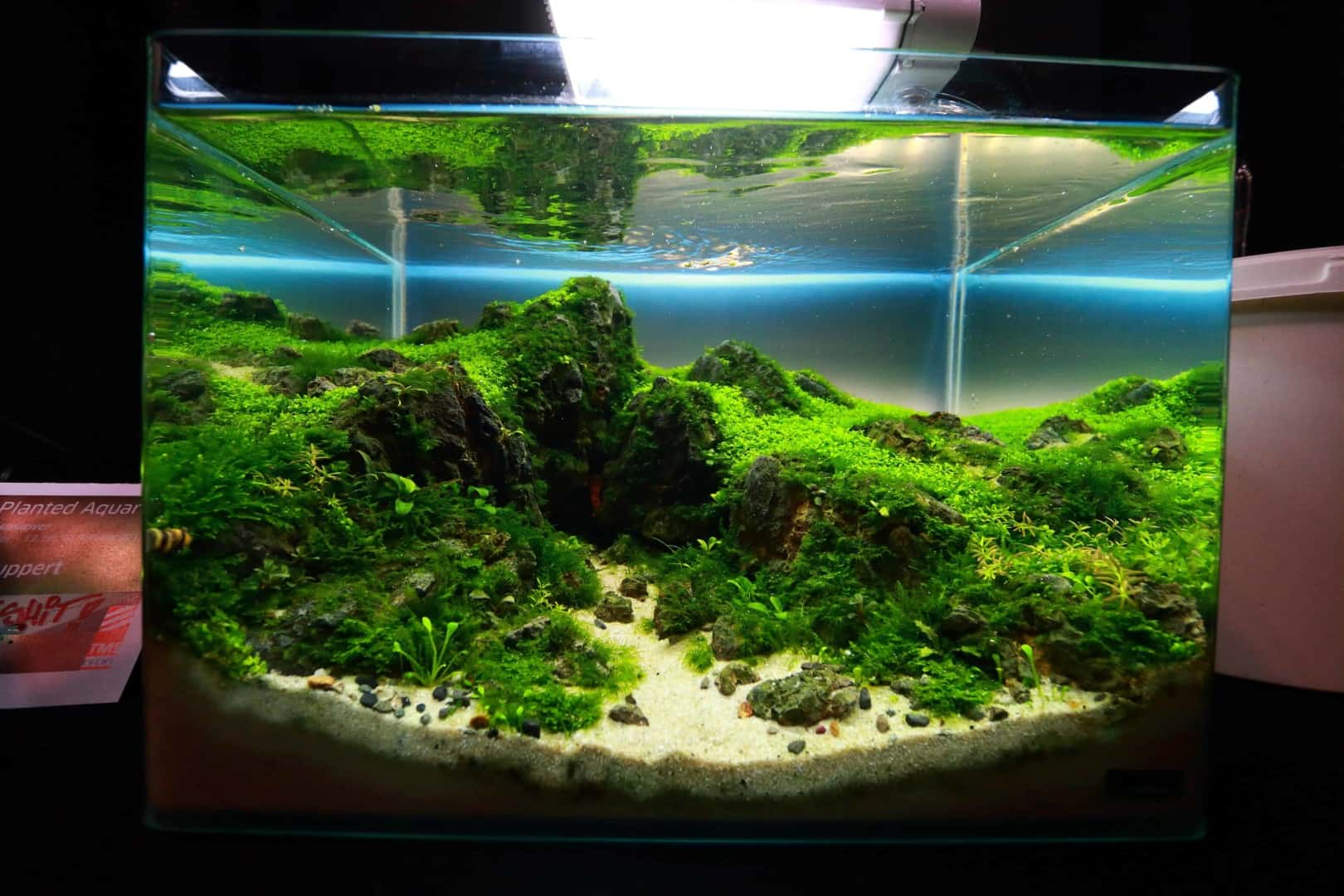 """Podcast Episode #148: 10 Jahre """"The Art of the Planted Aquarium (Harald Soßna) 2"""