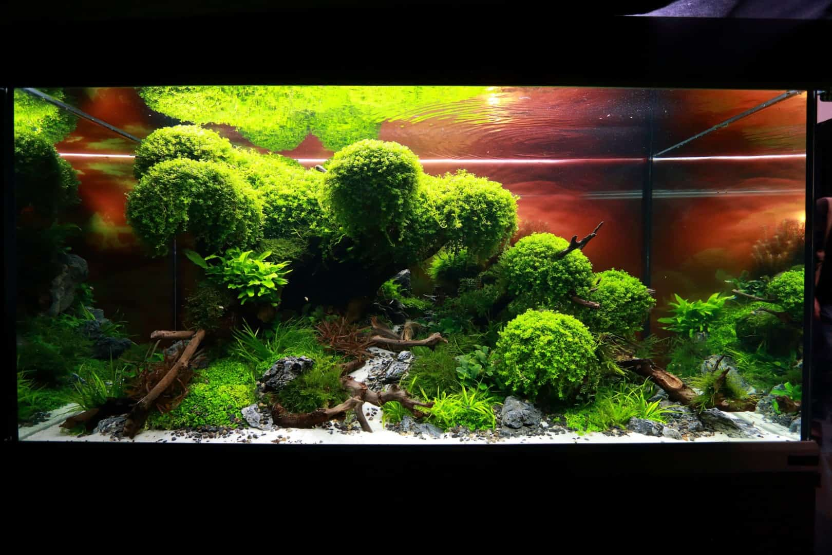 """Podcast Episode #148: 10 Jahre """"The Art of the Planted Aquarium (Harald Soßna) 3"""