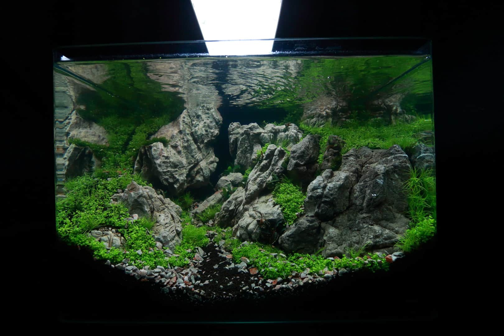 """Podcast Episode #148: 10 Jahre """"The Art of the Planted Aquarium (Harald Soßna) 20"""