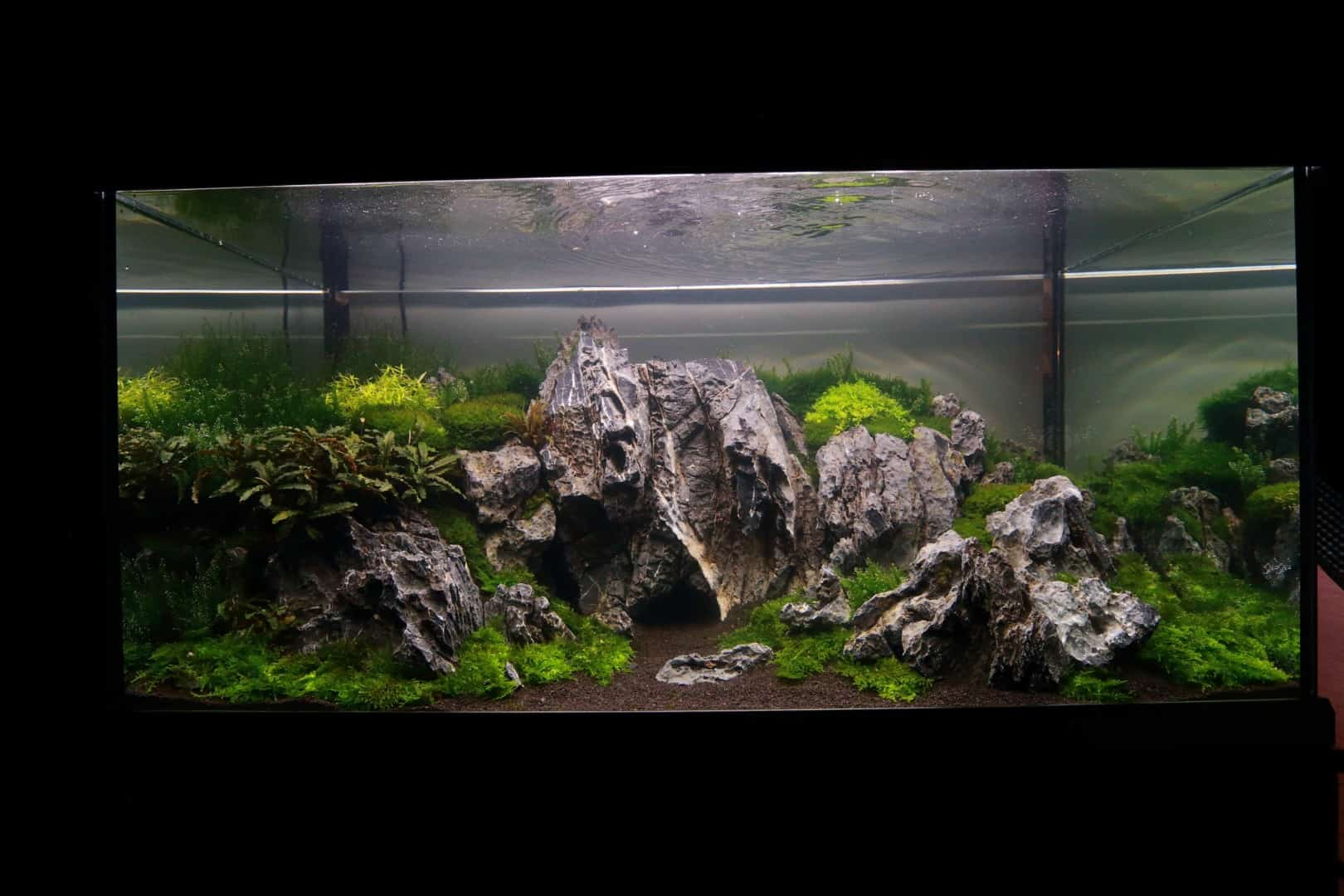 """Podcast Episode #148: 10 Jahre """"The Art of the Planted Aquarium (Harald Soßna) 21"""