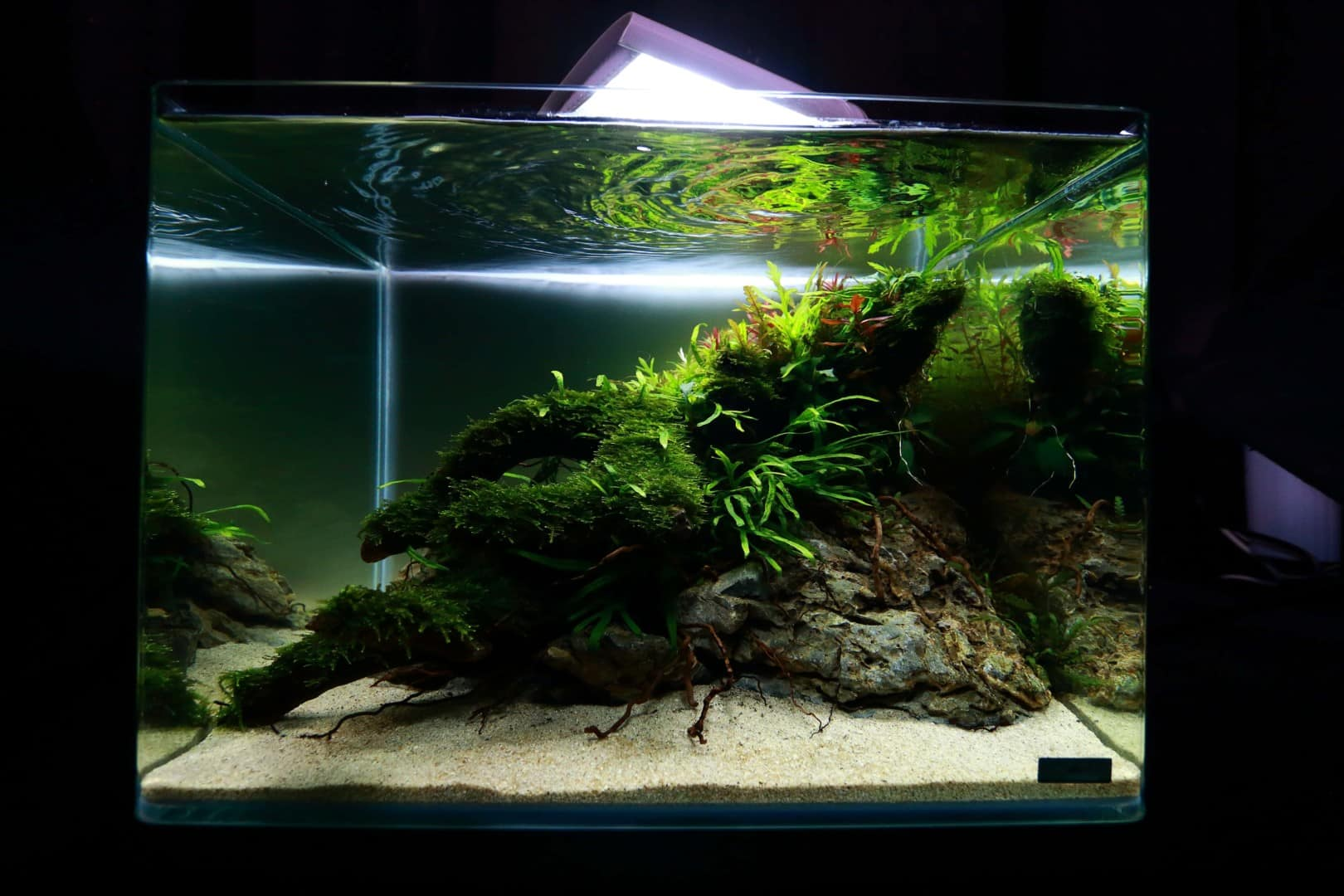 """Podcast Episode #148: 10 Jahre """"The Art of the Planted Aquarium (Harald Soßna) 4"""