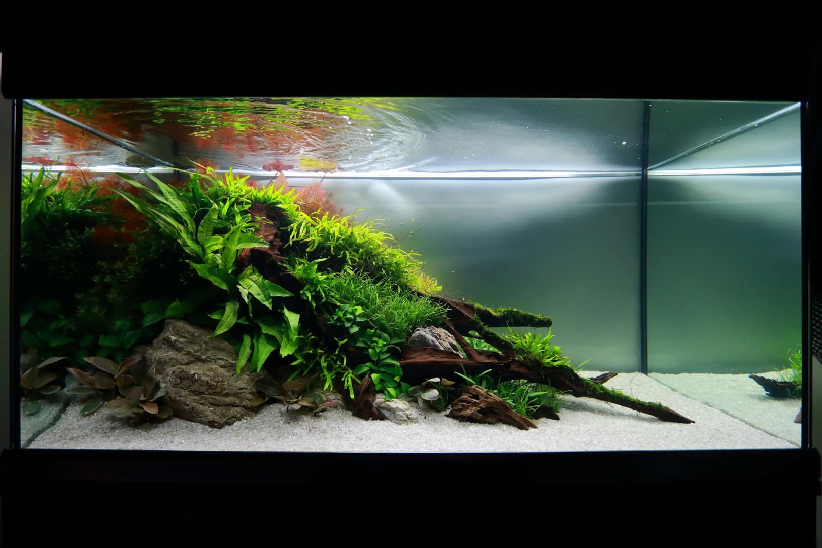 """Podcast Episode #148: 10 Jahre """"The Art of the Planted Aquarium (Harald Soßna) 5"""
