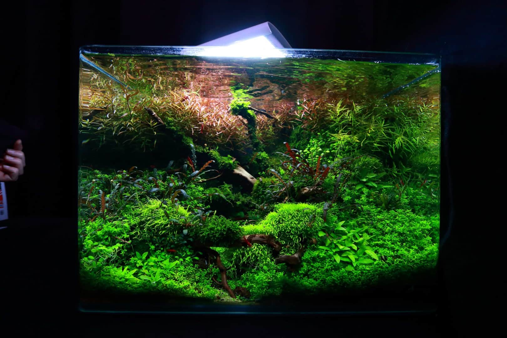 """Podcast Episode #148: 10 Jahre """"The Art of the Planted Aquarium (Harald Soßna) 6"""