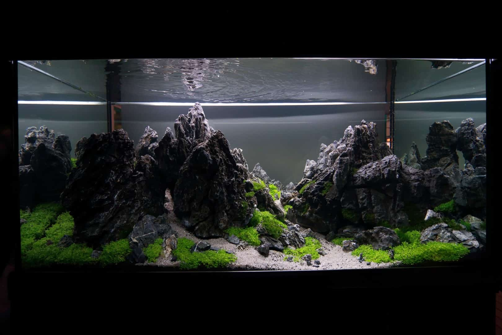 """Podcast Episode #148: 10 Jahre """"The Art of the Planted Aquarium (Harald Soßna) 7"""