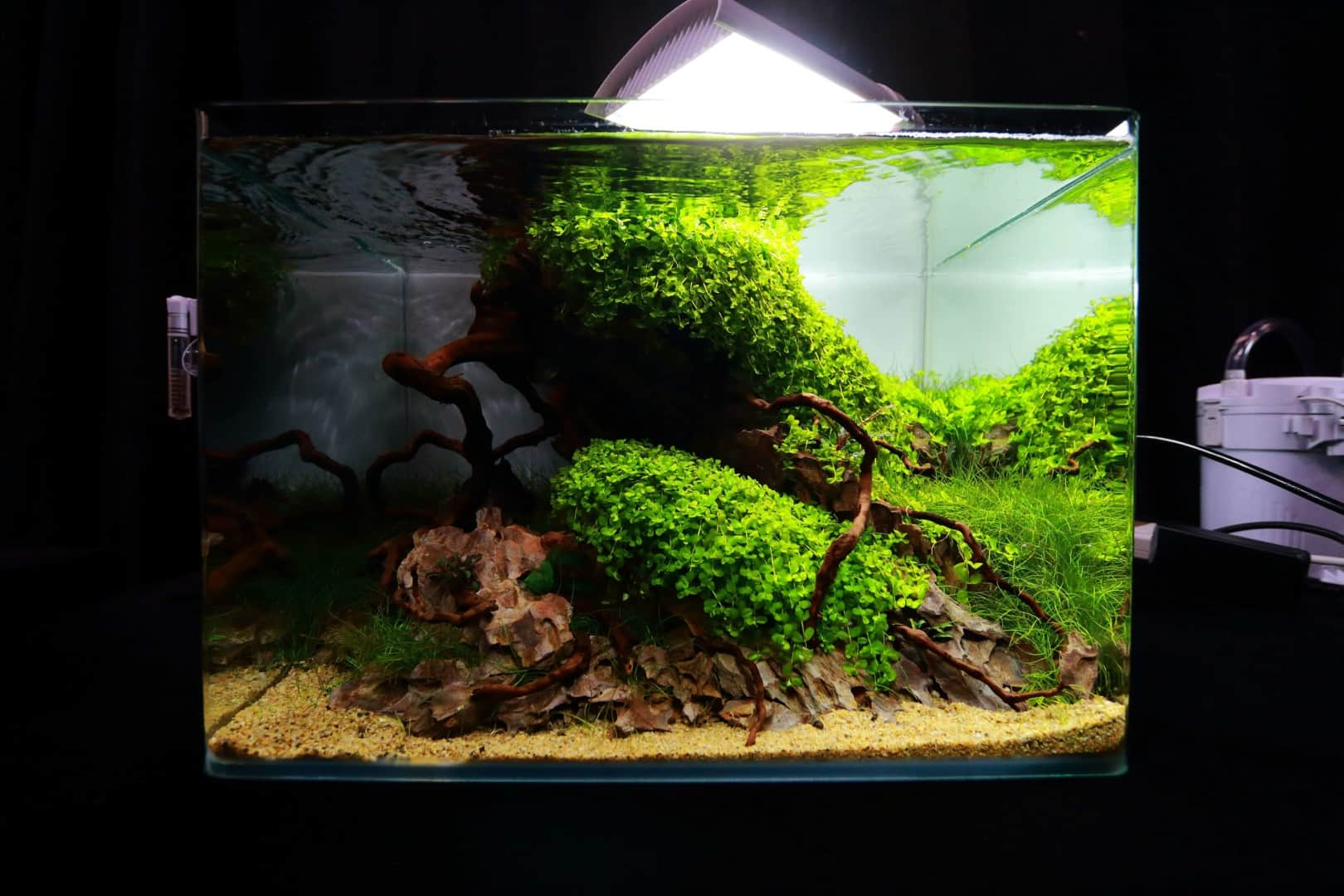 """Podcast Episode #148: 10 Jahre """"The Art of the Planted Aquarium (Harald Soßna) 8"""