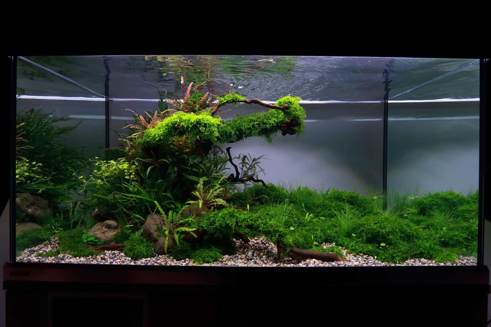 """Podcast Episode #148: 10 Jahre """"The Art of the Planted Aquarium (Harald Soßna) 9"""