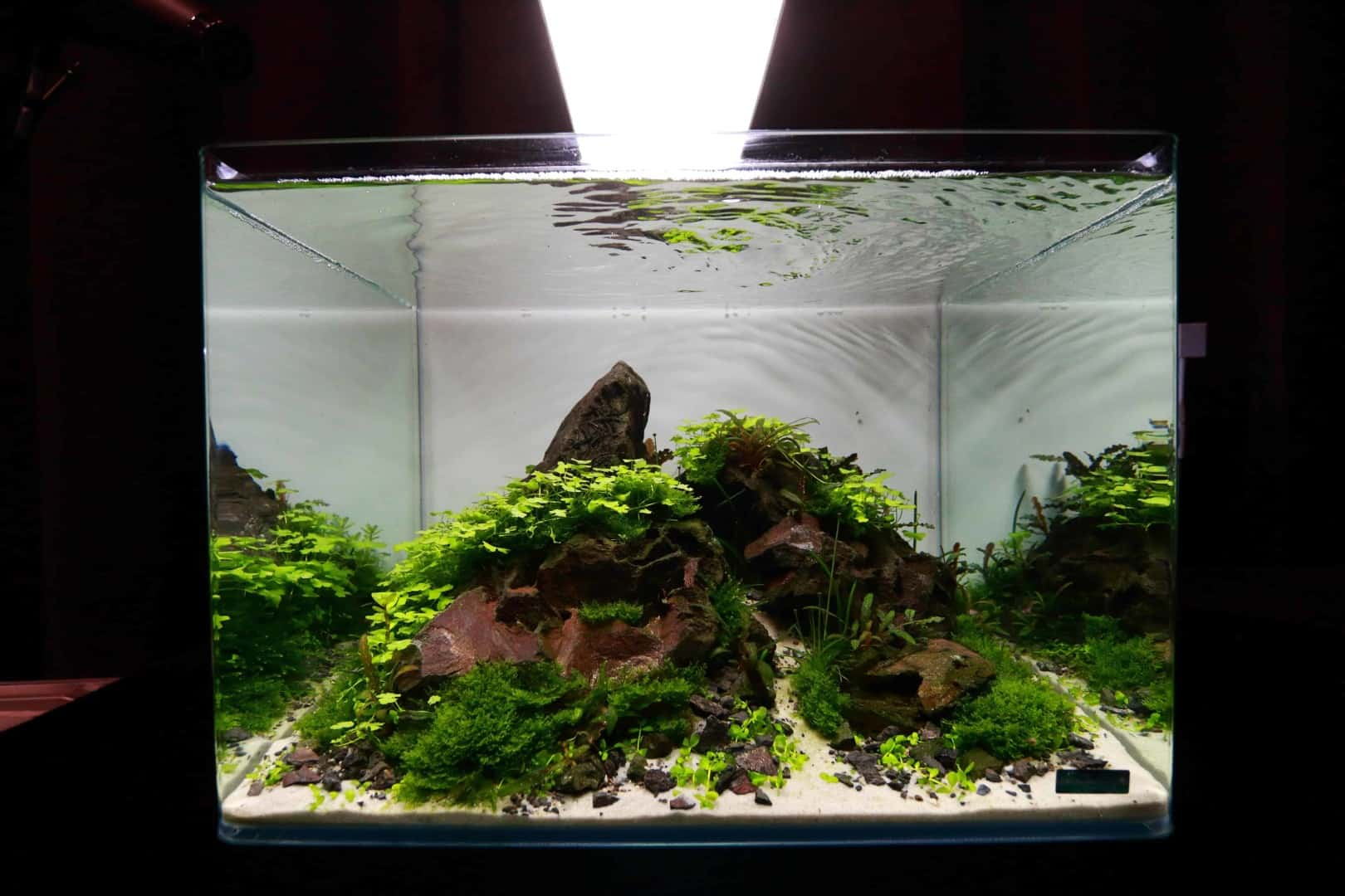 """Podcast Episode #148: 10 Jahre """"The Art of the Planted Aquarium (Harald Soßna) 10"""
