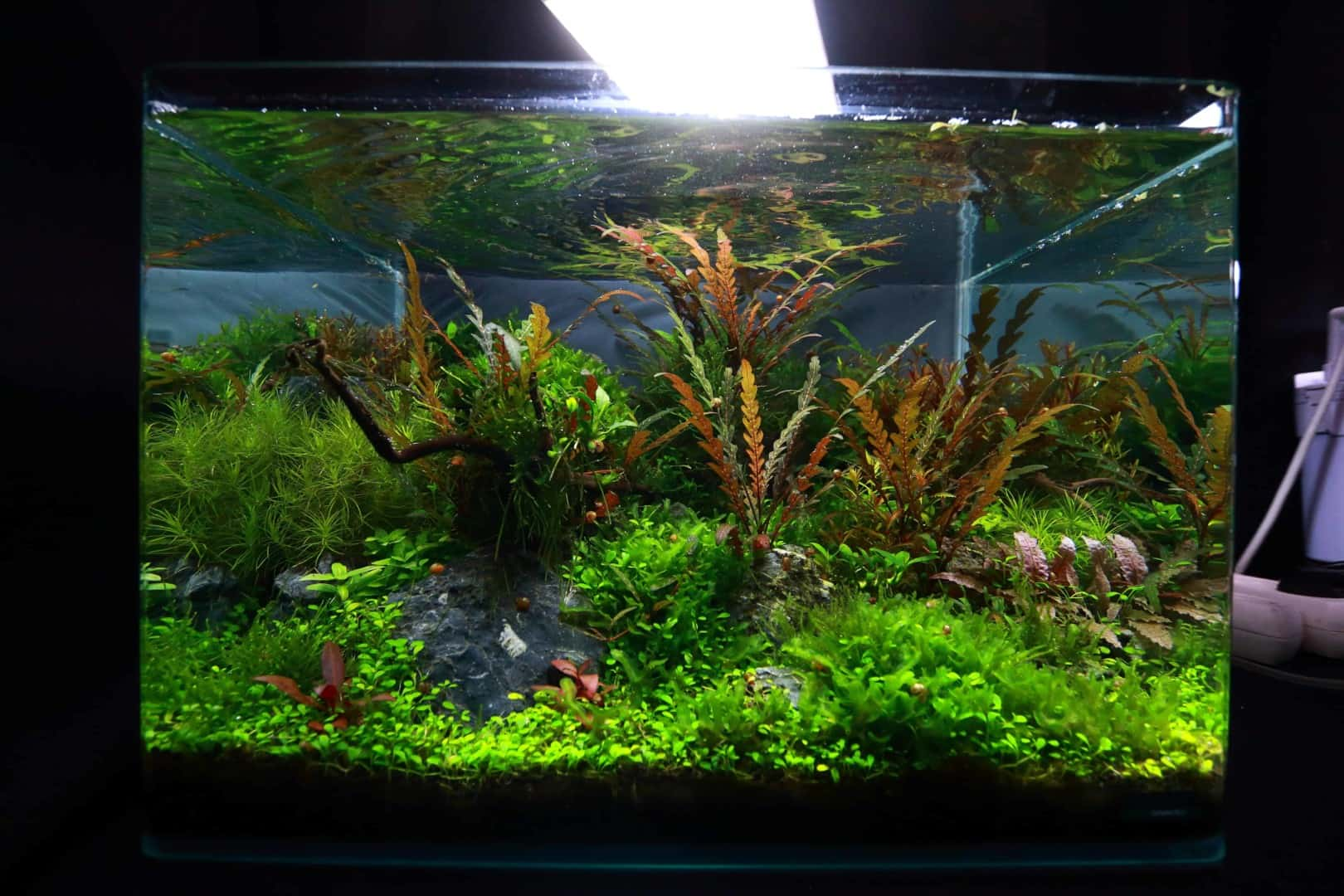 """Podcast Episode #148: 10 Jahre """"The Art of the Planted Aquarium (Harald Soßna) 12"""