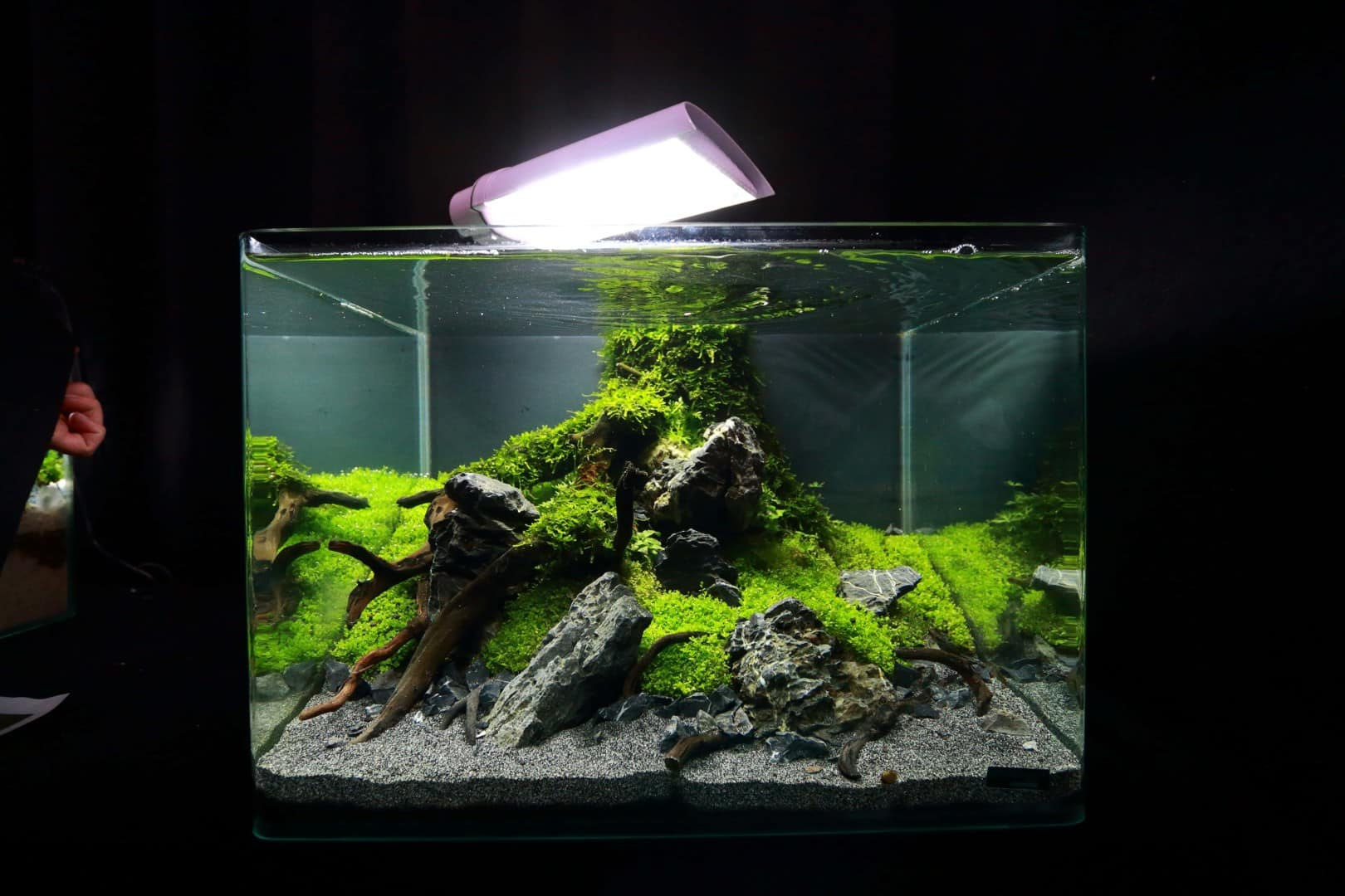 """Podcast Episode #148: 10 Jahre """"The Art of the Planted Aquarium (Harald Soßna) 14"""