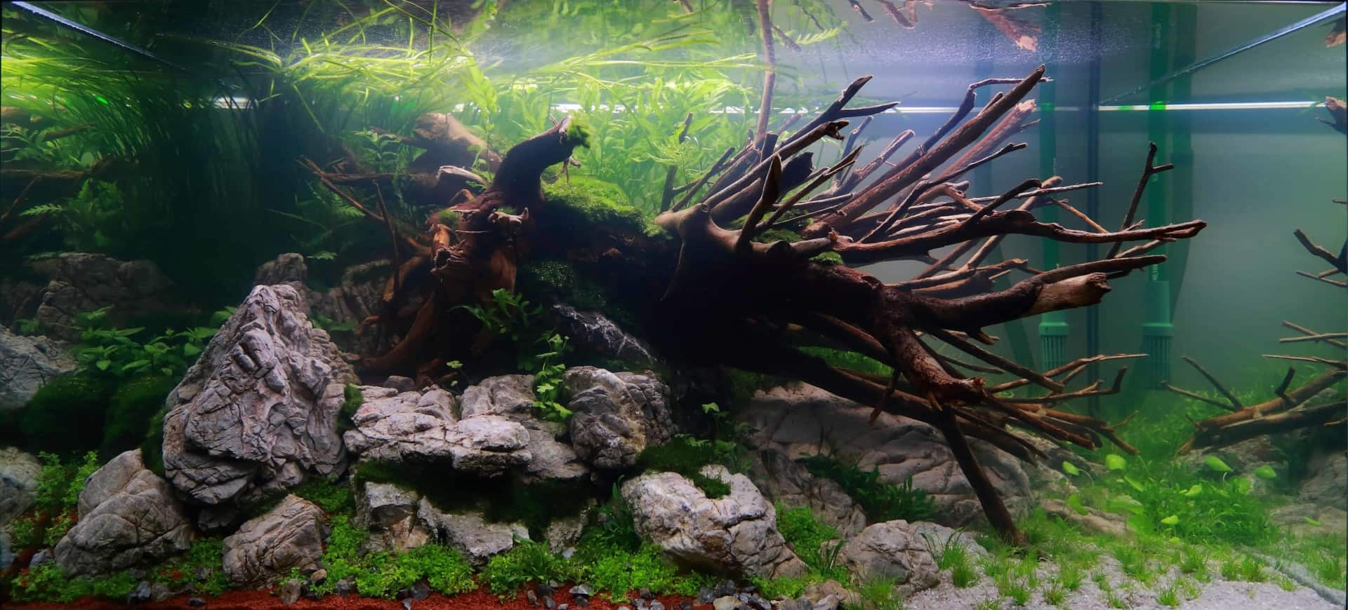 """Podcast Episode #148: 10 Jahre """"The Art of the Planted Aquarium (Harald Soßna) 15"""