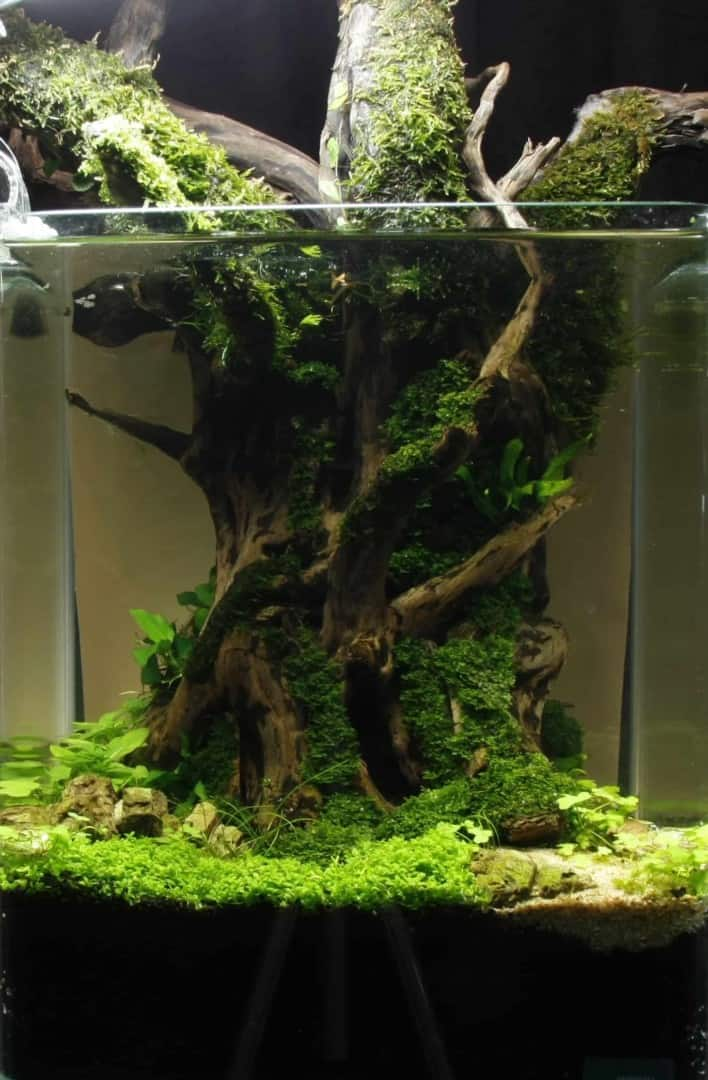"""Podcast Episode #148: 10 Jahre """"The Art of the Planted Aquarium (Harald Soßna) 27"""