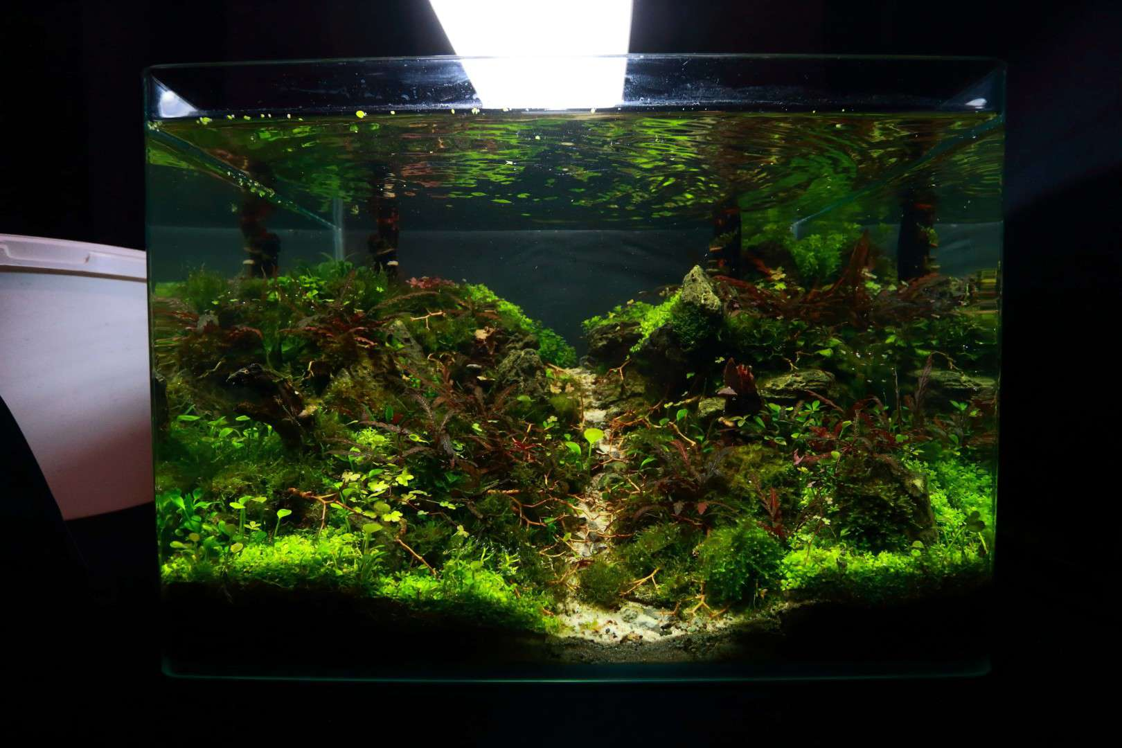 """Podcast Episode #148: 10 Jahre """"The Art of the Planted Aquarium (Harald Soßna) 16"""