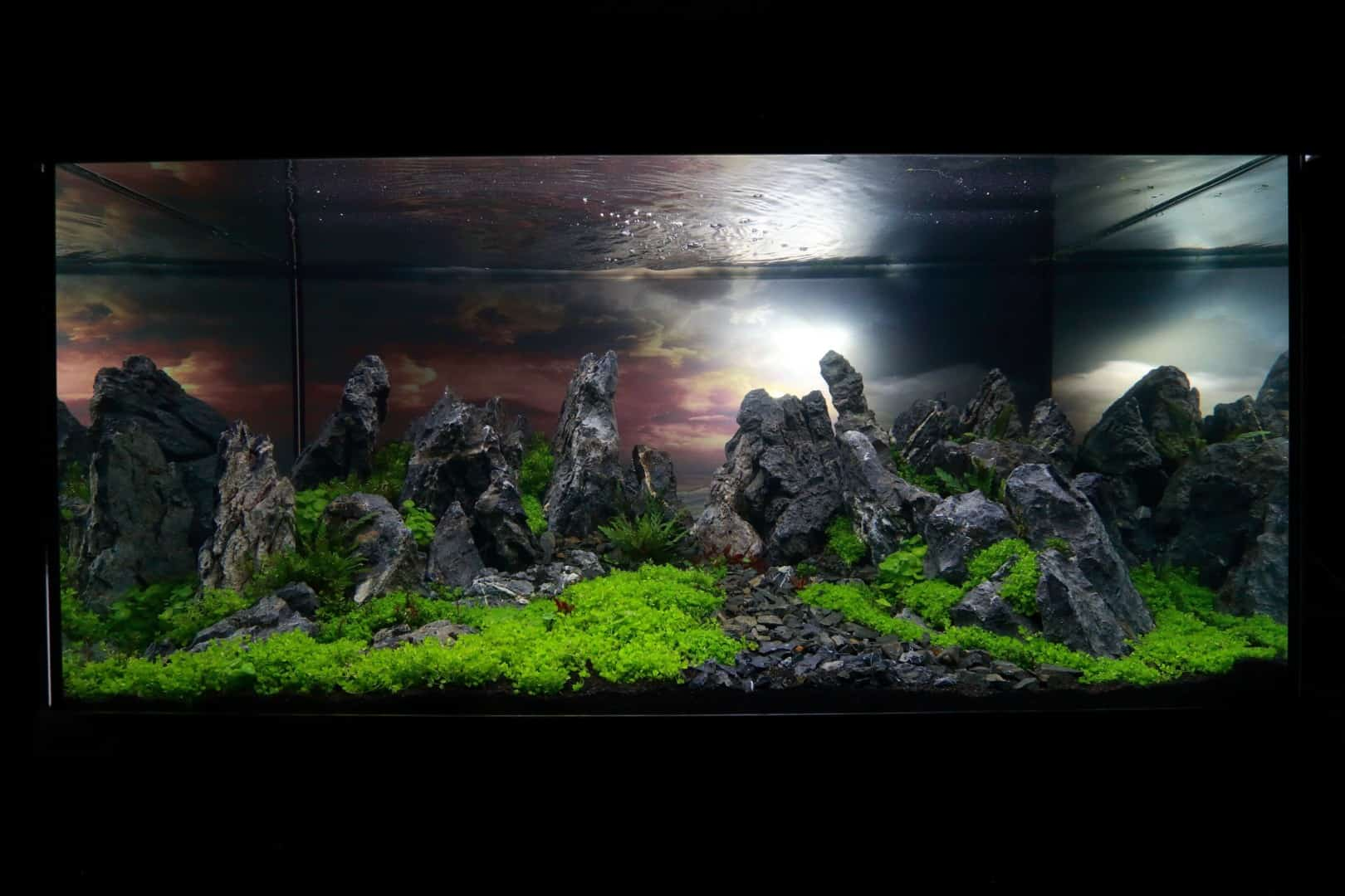 """Podcast Episode #148: 10 Jahre """"The Art of the Planted Aquarium (Harald Soßna) 17"""