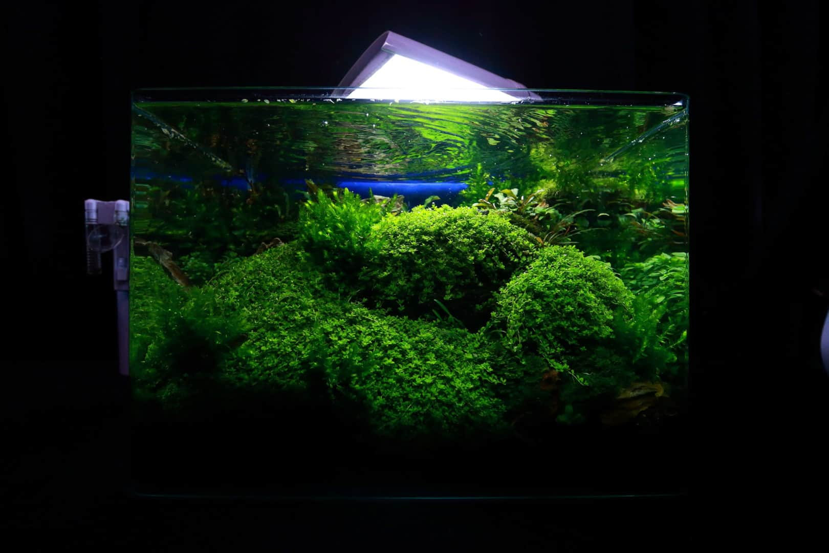 """Podcast Episode #148: 10 Jahre """"The Art of the Planted Aquarium (Harald Soßna) 18"""