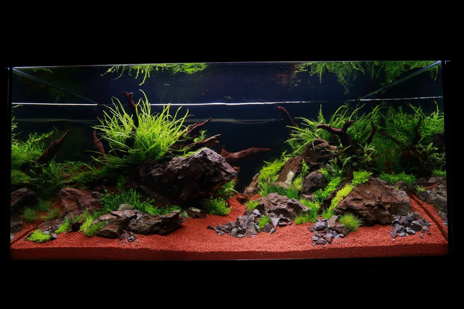 """Podcast Episode #148: 10 Jahre """"The Art of the Planted Aquarium (Harald Soßna) 19"""