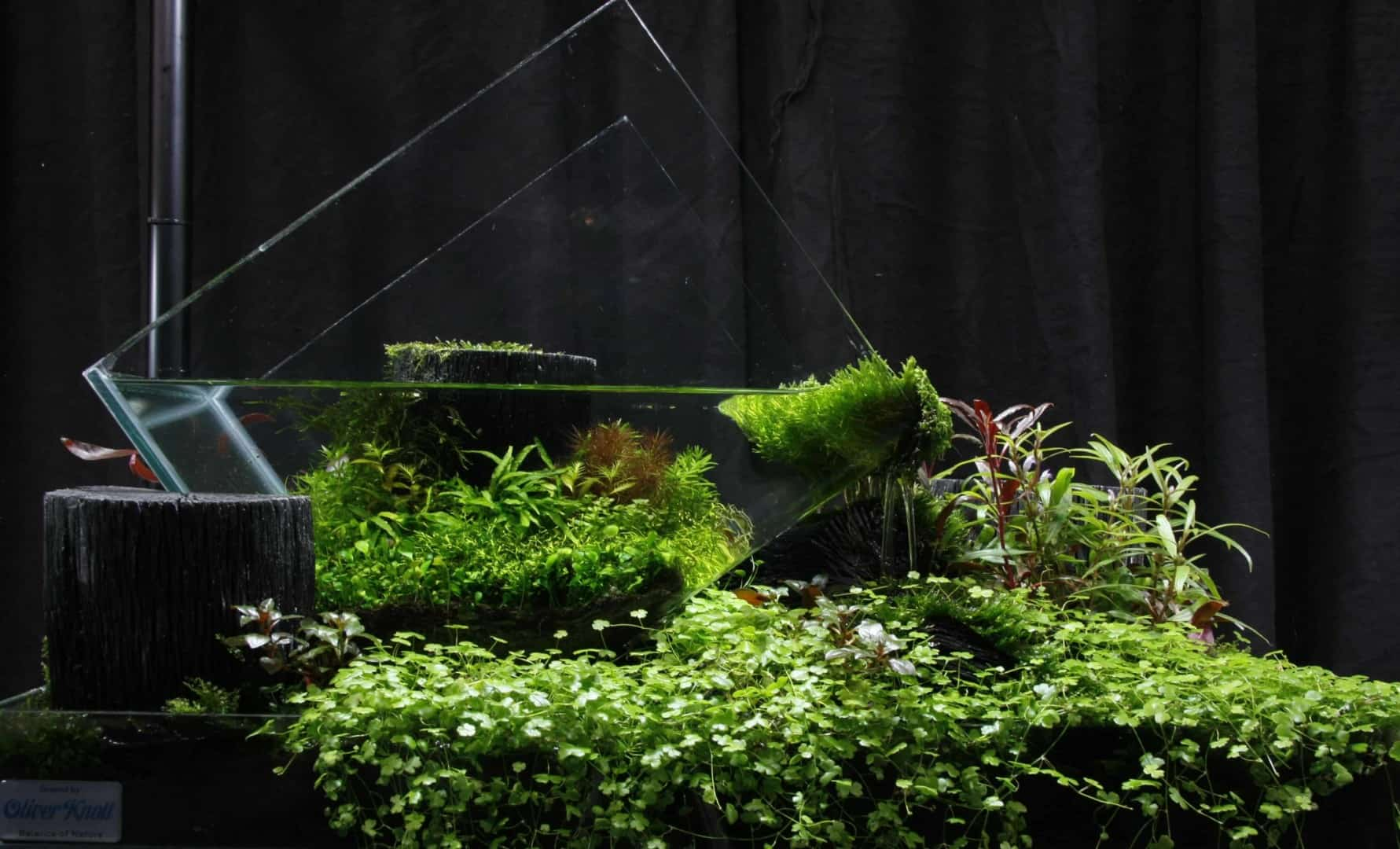 """Podcast Episode #148: 10 Jahre """"The Art of the Planted Aquarium (Harald Soßna) 29"""