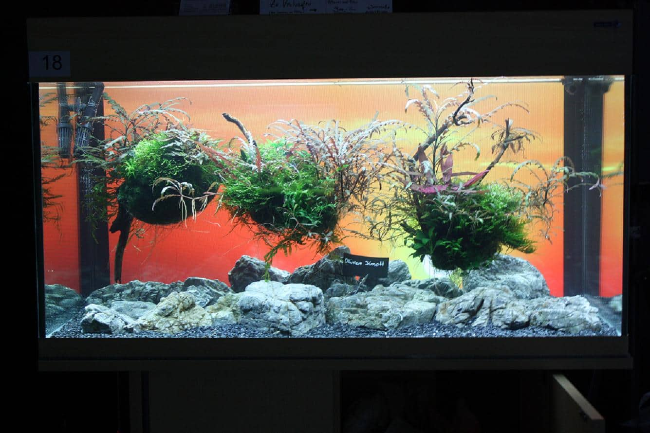 """Podcast Episode #148: 10 Jahre """"The Art of the Planted Aquarium (Harald Soßna) 32"""
