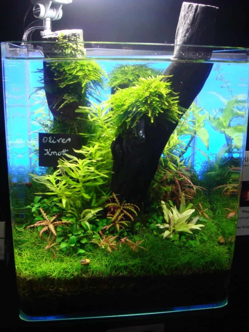 """Podcast Episode #148: 10 Jahre """"The Art of the Planted Aquarium (Harald Soßna) 35"""