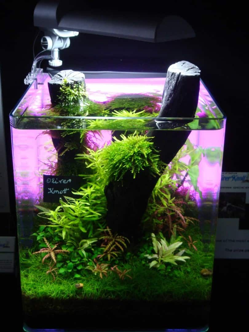 """Podcast Episode #148: 10 Jahre """"The Art of the Planted Aquarium (Harald Soßna) 36"""
