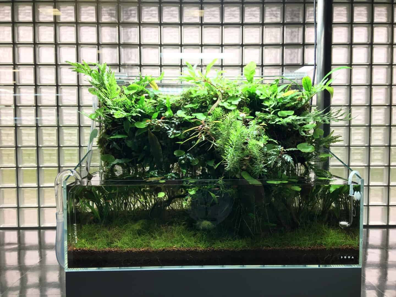 Podcast Episode #149: Das Wasserfall Aquarium (Jurijs Jutjajevs) 9