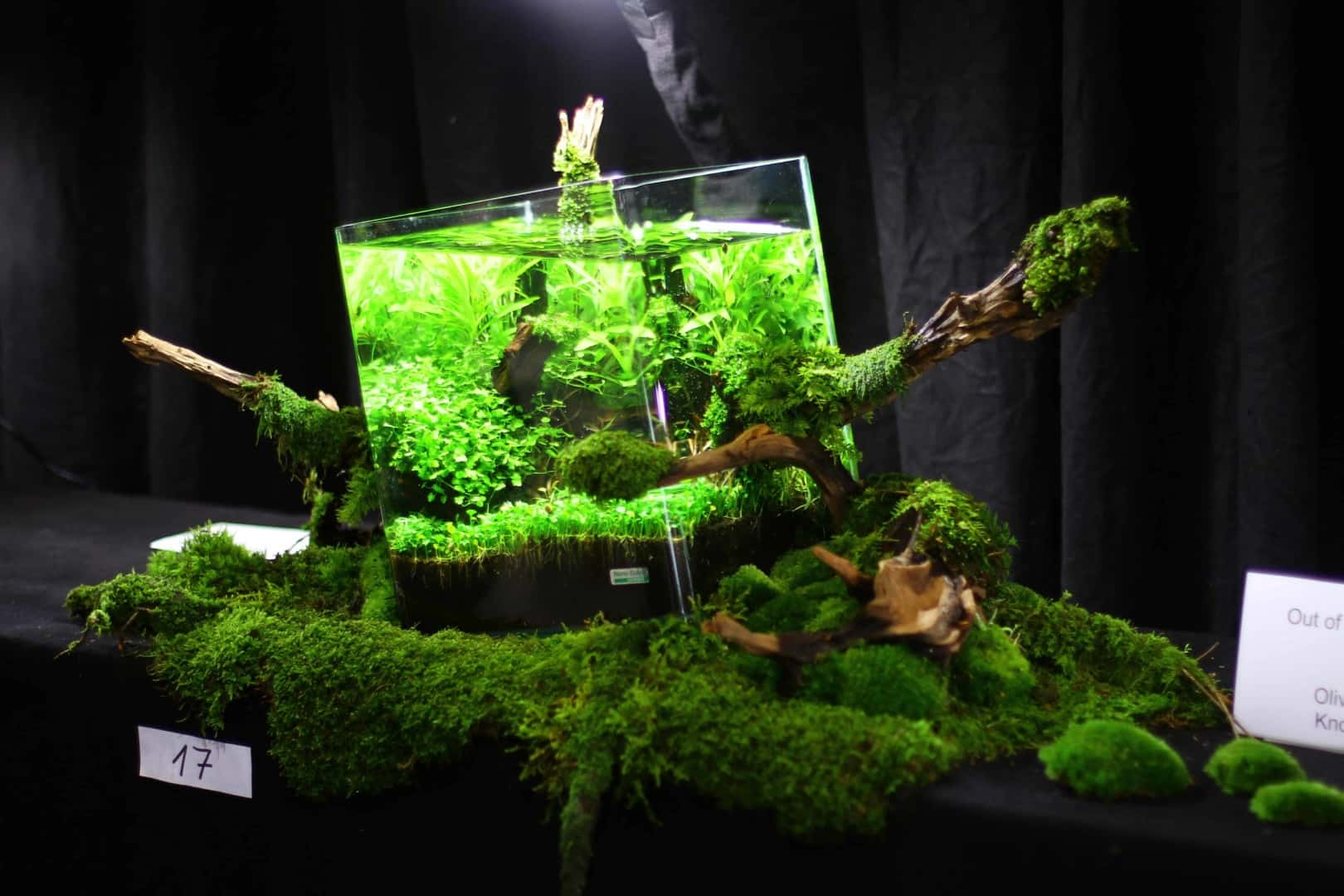 """Podcast Episode #148: 10 Jahre """"The Art of the Planted Aquarium (Harald Soßna) 37"""