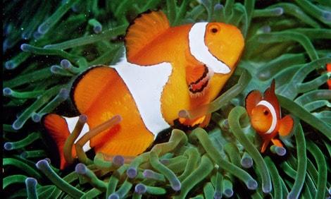 154 : Expeditionen zu den Biotopen der Aquarienfische Teil 2 (Heiko Blessin) 4