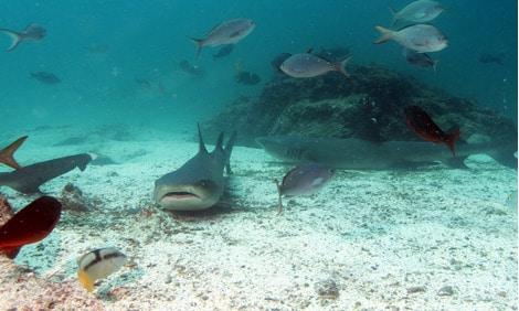 154 : Expeditionen zu den Biotopen der Aquarienfische Teil 2 (Heiko Blessin) 22