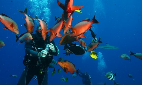 154 : Expeditionen zu den Biotopen der Aquarienfische Teil 2 (Heiko Blessin) 31