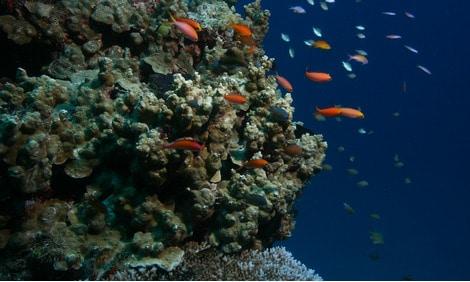 154 : Expeditionen zu den Biotopen der Aquarienfische Teil 2 (Heiko Blessin) 33
