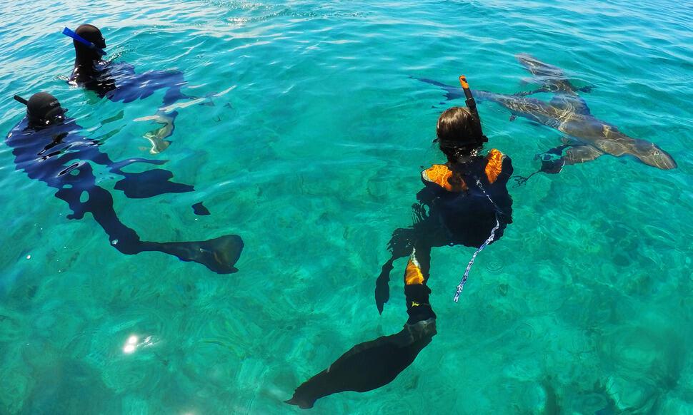 154 : Expeditionen zu den Biotopen der Aquarienfische Teil 2 (Heiko Blessin) 61