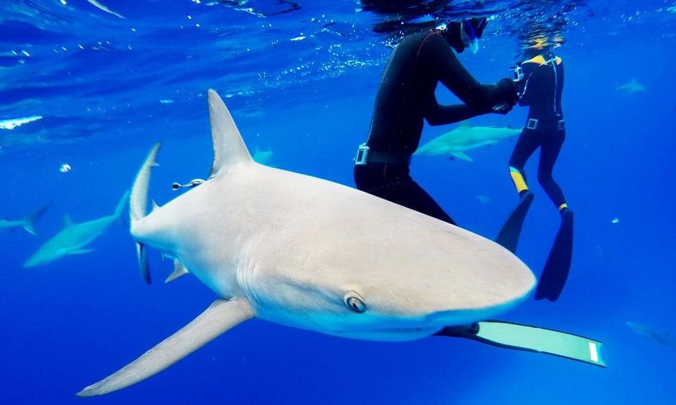 154 : Expeditionen zu den Biotopen der Aquarienfische Teil 2 (Heiko Blessin) 62