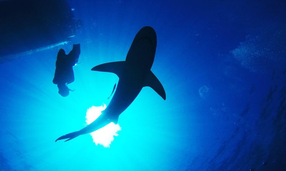 154 : Expeditionen zu den Biotopen der Aquarienfische Teil 2 (Heiko Blessin) 63