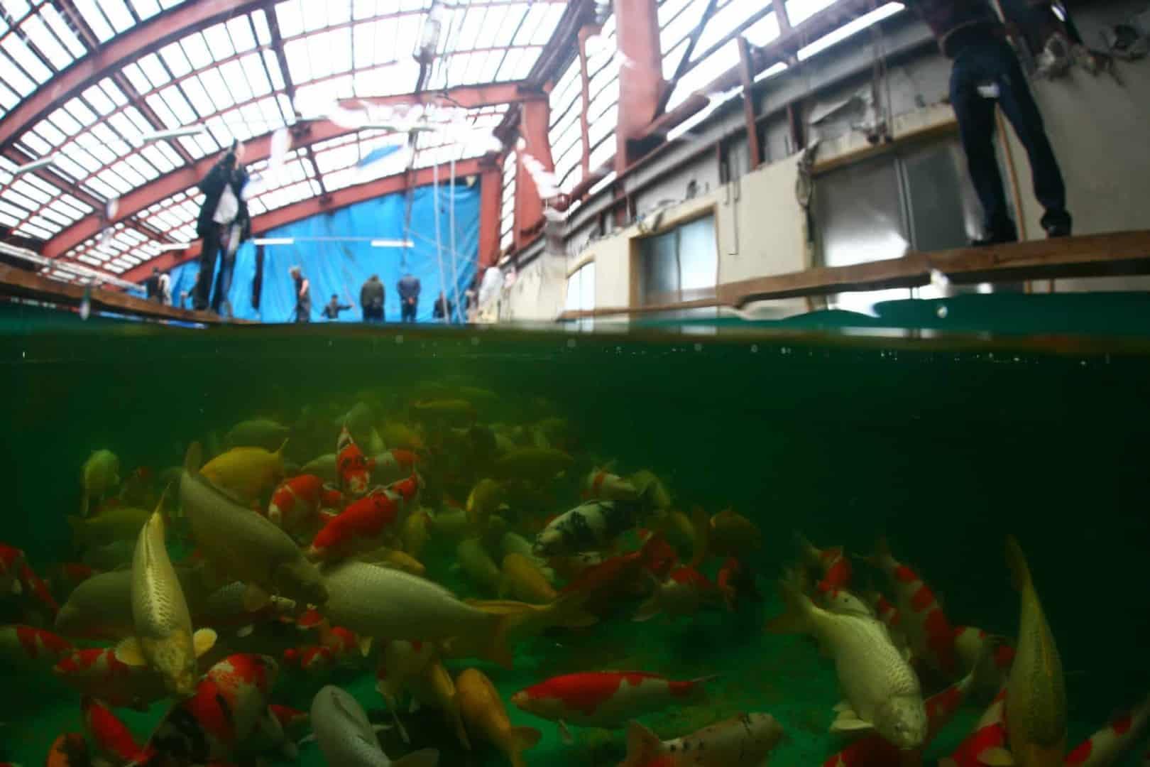 154 : Expeditionen zu den Biotopen der Aquarienfische Teil 2 (Heiko Blessin) 71