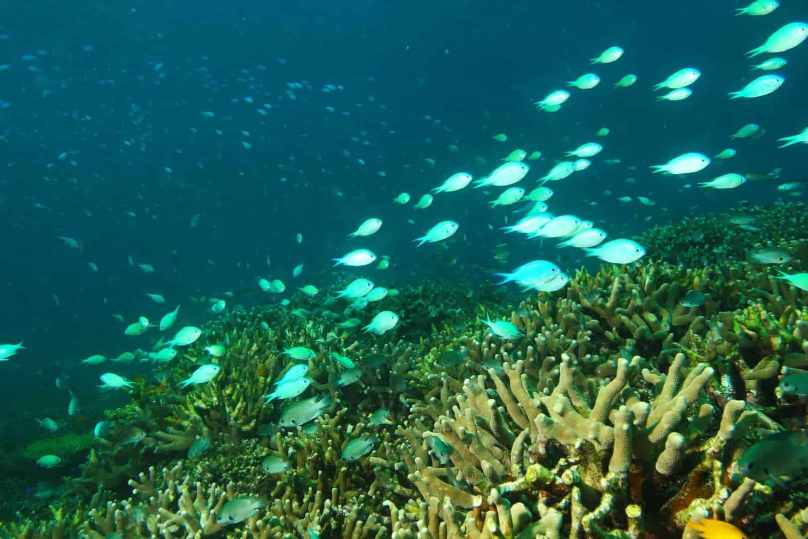 154 : Expeditionen zu den Biotopen der Aquarienfische Teil 2 (Heiko Blessin) 72