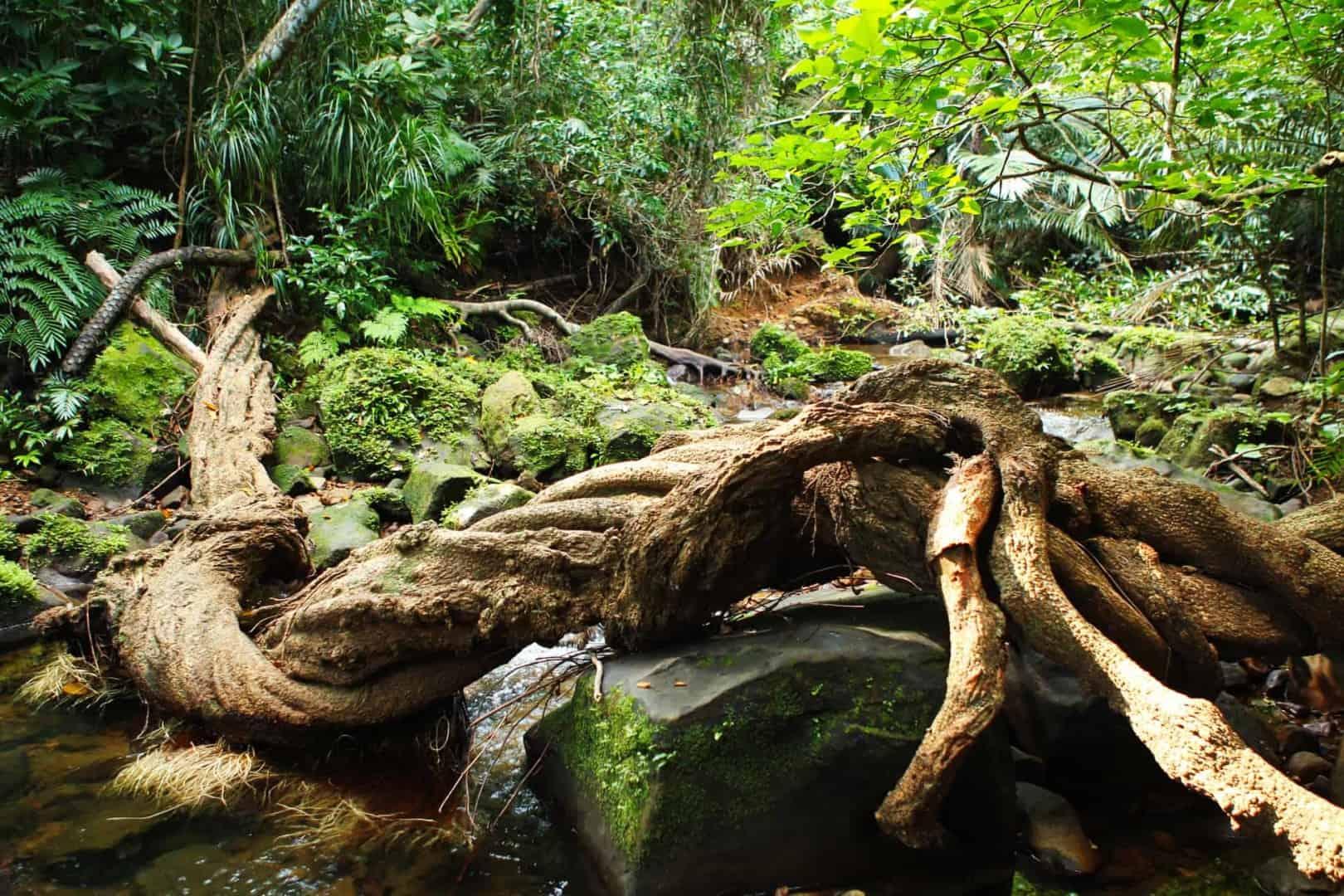 154 : Expeditionen zu den Biotopen der Aquarienfische Teil 2 (Heiko Blessin) 74